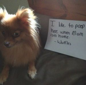 hilarious-dog-shaming-photos-ever_18