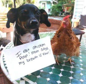 hilarious-dog-shaming-photos-ever_2