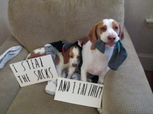 hilarious-dog-shaming-photos-ever_20