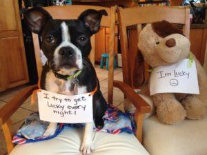 hilarious-dog-shaming-photos-ever_4