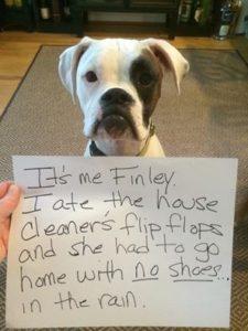 hilarious-dog-shaming-photos-ever_5
