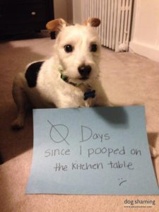 hilarious-dog-shaming-photos-ever_6