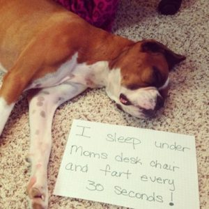 hilarious-dog-shaming-photos-ever_8