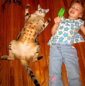 mokave-jag-cats_6