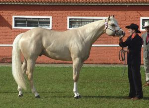 the-american-quarter-horse-is-an-american-breed-of-horse1200px-quarter_horserefon-cleaned