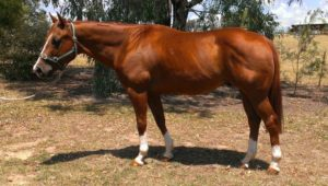 the-american-quarter-horse-is-an-american-breed-of-horse3679271