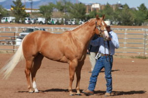 the-american-quarter-horse-is-an-american-breed-of-horseimg_1940