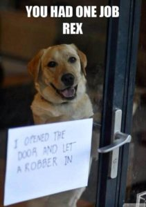 funny-dog-pictures-with-captions_11