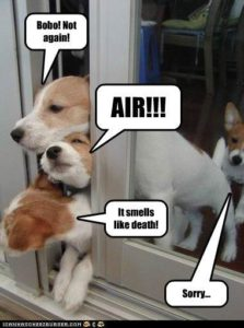 funny-dog-pictures-with-captions_19