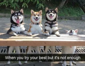 funny-dog-pictures-with-captions_2