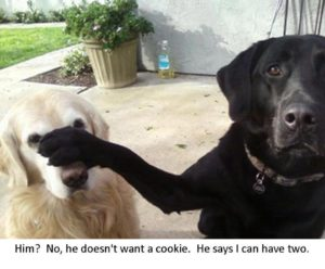funny-dog-pictures-with-captions_23