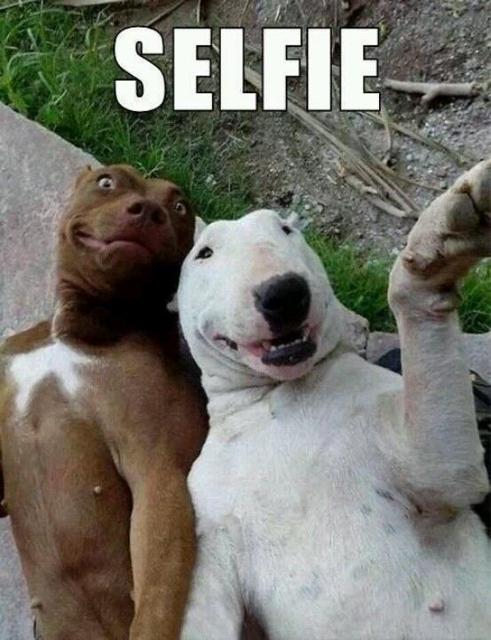 funny dog pictures with captions 26 fallinpets