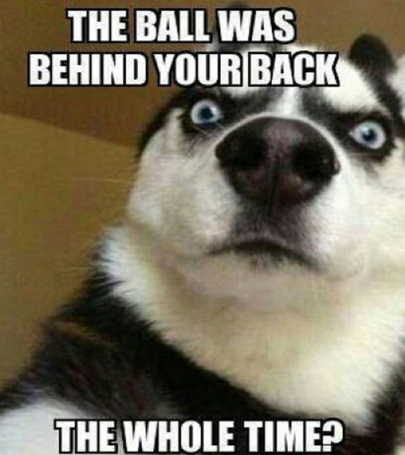 funny dog pics with caption