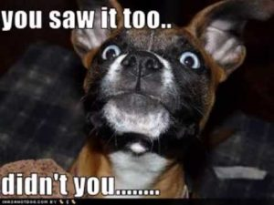 funny-dog-pictures-with-captions_6