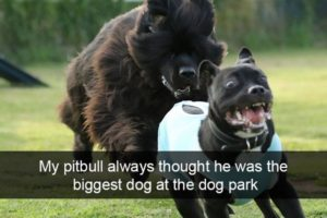 funny-dog-pictures-with-captions_7