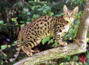 serengeti-cat_16
