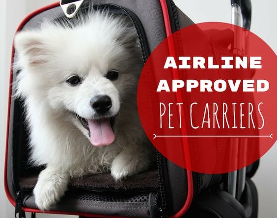 airline-approved-pet-carrier_020
