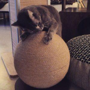 best-cat-toys_004