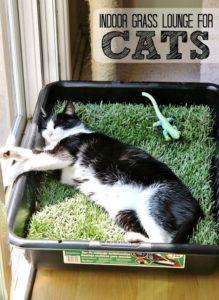 best-cat-toys_005