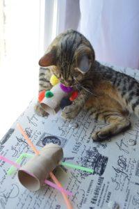 best-cat-toys_008