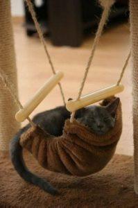 best-cat-toys_024