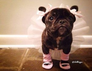 halloween-costumes-for-dogs_002