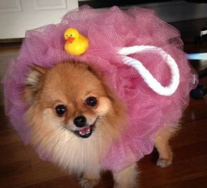 halloween-costumes-for-dogs_006