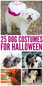 halloween-costumes-for-dogs_010