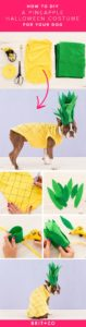 halloween-costumes-for-dogs_011