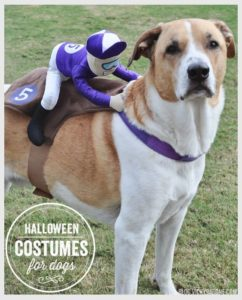 halloween-costumes-for-dogs_012