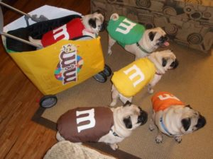 halloween-costumes-for-dogs_016
