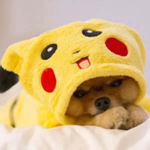 halloween-costumes-for-dogs_018
