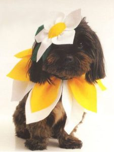 halloween-costumes-for-dogs_019