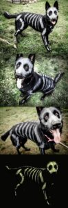 halloween-costumes-for-dogs_020