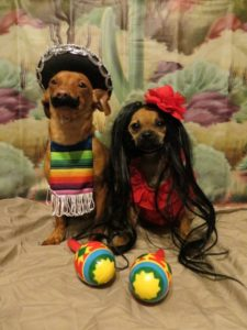 halloween-costumes-for-dogs_021