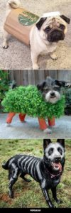 halloween-costumes-for-dogs_022