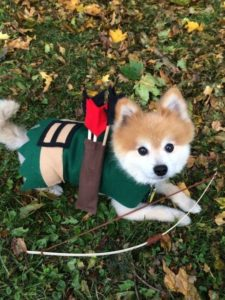 halloween-costumes-for-dogs_023