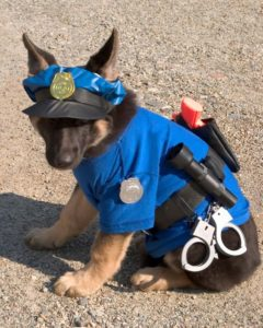 halloween-costumes-for-dogs_024