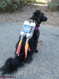 halloween-costumes-for-dogs_025