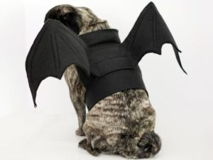 halloween-costumes-for-dogs_026