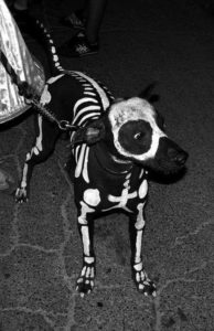 halloween-costumes-for-dogs_028