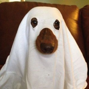 halloween-costumes-for-dogs_029