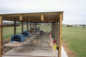 outdoor-dog-kennels_015