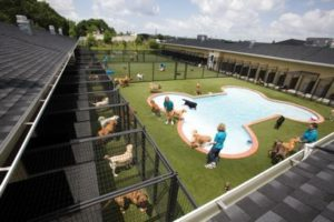 outdoor-dog-kennels_016
