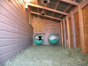 outdoor-dog-kennels_026