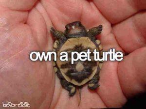 pet-turtles_002
