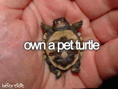 pet-turtles_002