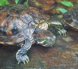 pet-turtles_004