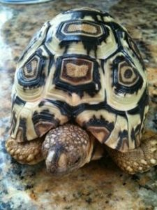 pet-turtles_006