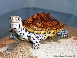 pet-turtles_008